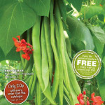 Planning Your Garden this Autumn? For Seeds, Fruits and Vegetables, Thompson & Morgan Seeds are Perfect!